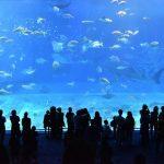 Akvárium Kelly Tarlton's Sea Life