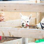 Kam na dovolenou s dětmi - TOP 5 evropských destinací